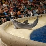 Dolphin Show at Brookfield Zoo