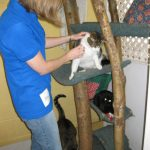 Tails Humane Society: Kitty Play Time