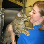 Tails Humane Society: Kitty Play Time (Mitch)