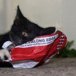 Kitties like marathoning TV shows on Netflix, too!
