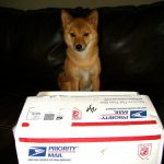 This adorable dog probably opened the package in the time it took to find USPS' social icons.
