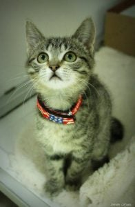 Meow if you love the Fourth!