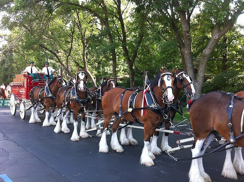 Check out those Clydesdales!