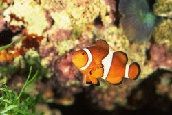 Telling a joke just because your prospect is a clownfish is the fish version of racism.