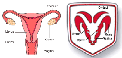 dodge-ram-uterus