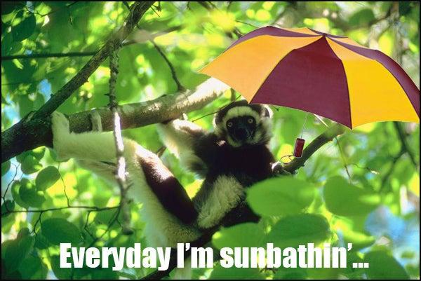 monkey sunbathin