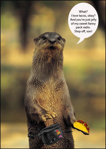 taco loving otter