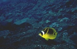#yellowfishinablueworld