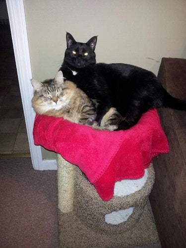 QLP Cats
