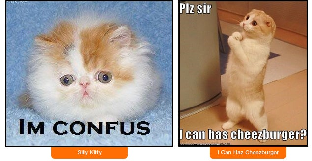 Confus Kitty