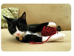 CatWithYarn