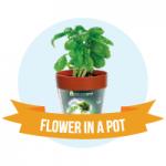 Flower-in-a-Pot