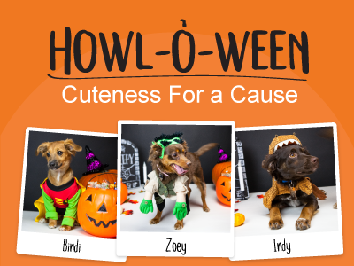 Quality Logo Products Pet Costume Contest