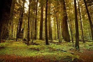 Garcia River Forest