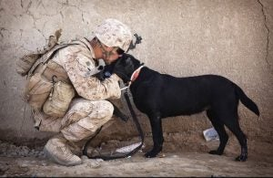 Dog with the military