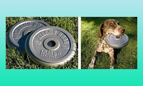 Iams weight-shaped frisbees