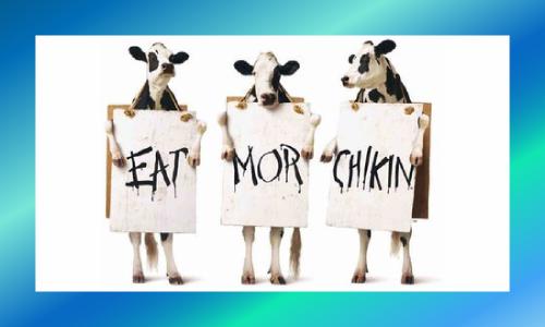 Chick-fil-A cows