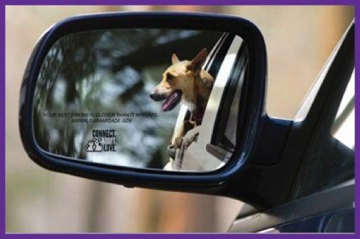 animal shelter car decal