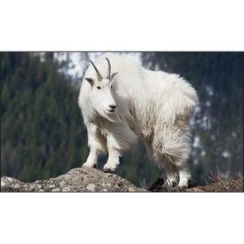 North American Wildlife Executive Calendar for your School