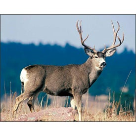 Wildlife Portraits Spiral Calendar with Your Logo