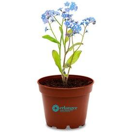 Wee Planter Kit