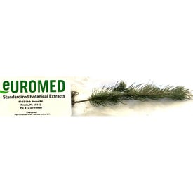 Colorado Blue Spruce Tree Seedlings in Clear Eco-Friendly Bag