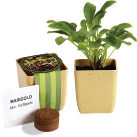 Flower Pot Set with Marigold Seeds for your School