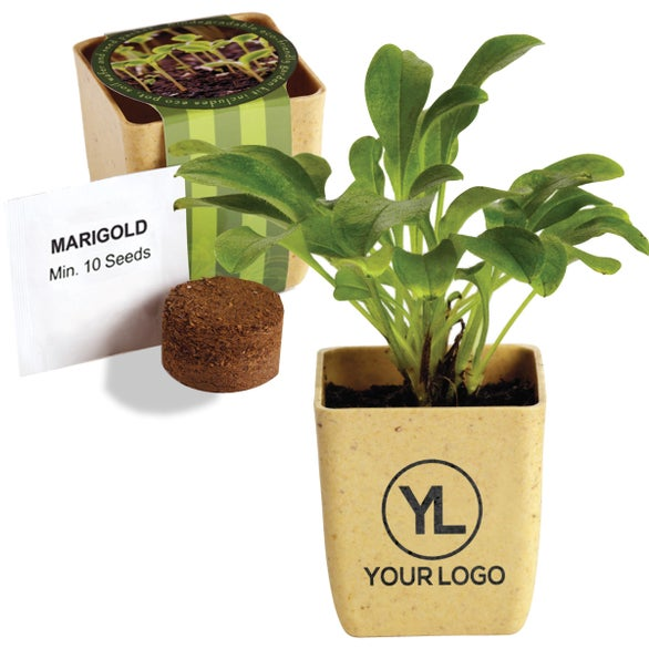 Tan Flower Pot Set with Marigold Seeds