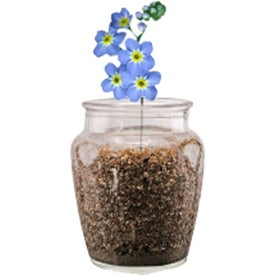 Forget-Me-Not Plant Kit for your School